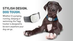 Bailey is now TAGGED!  Pet GPS tracker in case anything happens...Tagg- The Pet Tracker - Stylish Design. Dog Tough.