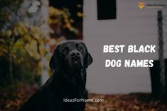 If you are roaming on the internet in search of names for a black dog, then here you can find male as well as female black dog names which are following the current trend of society. Black dogs are one of the most special breeds in the category of dogs, as they have very gorgeous fur. . #dog #dogs #frenchbulldog #doglovers #doglife #dogsofinsta #doggy#lovedogs #doglove #instadogs #cutedog #dogsofinstaworld #dogslife #happydog #cutedogs #blackdog #blackdogs Black Dog Names, Black Dogs, Best Black, Cool Names, Happy Dogs, Dog Life, Cute Dogs, French Bulldog, Dog Lovers
