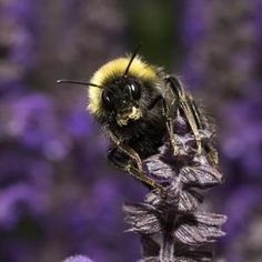#Velcro-Like Cells in Flowers Help #Insects Grip