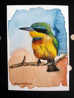 ACEO Limited Edition 5/10- A Little Green Bee Eater, in watercolor