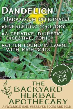 The weed gardens hate, and herbalists love – dandelions have many medicinal uses. - All About Gardens Wound Healing, Healing Herbs, Medicinal Plants, Herbal Remedies, Home Remedies, Natural Remedies, Taraxacum Officinale, Herbs For Health, Spiritual Health