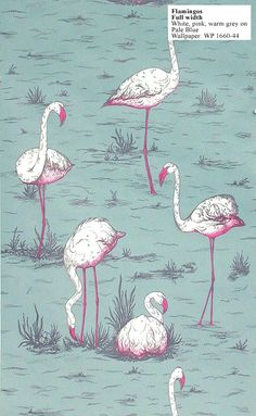 Traditional Home - 1950's to 1960's - Flamingos Wall paper