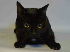 Marcy is a shy friendly girl at Brooklyn ACC shelter to be killed at noon tomorrow  with her sister Chacha.they don't understand why they were dumped please save her life.visit pets on death row on Facebook URGENT. .save her life