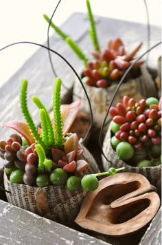 succulents arranged on paper mache baskets