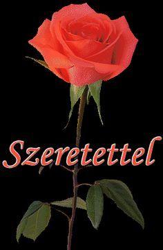 SZERETETTEL Plants, Roses, Art, Craft Art, Pink, Rose, Kunst, Plant, Gcse Art
