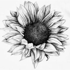 Sunflower tattoo I love this. one of the most beautiful sunflower tattoos I have. - Sunflower tattoo I love this. one of the most beautiful sunflower tattoos I have seen almost makes - Sunflower Tattoo Sleeve, Sunflower Tattoo Shoulder, Sunflower Tattoo Small, Sunflower Tattoos, Sunflower Tattoo Design, White Sunflower, Sunflower Images, Sunflower Art, Flower Tattoos On Shoulder