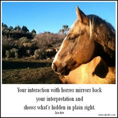 #executives #curiosity #CEOmentoring  #horses #selfdiscovery #courage #PersonalEvolution #thoughts #Innovation #Leadership