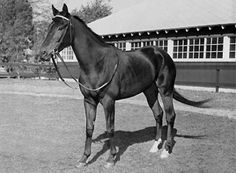 The renowned Kelso was foaled at Claiborne Farm on April 04, 1957. He competed for eight seasons, winning Horse of the Year five years in a row. Kelso is ranked the 4th top racehorse of the 20th Century.