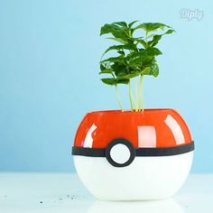 You can totally catch em all with this DIY Pokémon planter! #crafty #DIY #crafts…