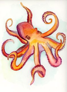 Octopus Study 2 Print - Watercolor Illustration