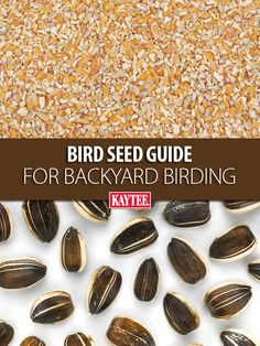 5lb Bird & Wildlife Accessories Lovely Lyric Peanut Pieces Wild Bird Food