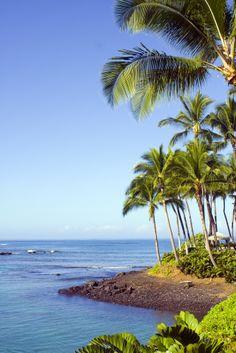 Las palmeras llenan de color las costas de la #RivieraNayarit. http://www.bestday.com.mx/Riviera-Nayarit/ReservaHoteles/