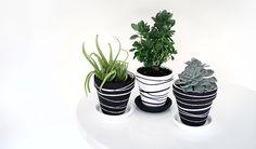 new Ideas succulent painting clay pots Painted Plant Pots, Painted Flower Pots, Clay Flower Pots, Clay Pot Crafts, Diy Crafts, Diy Clay, Decoration Plante, Diy Garden Decor, Diy Painting