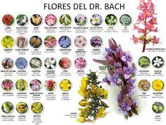 Al principio, el Dr. Bach creó un sistema compuesto por 12 únicos remedios florales que consideró básicos para tratar patrone...