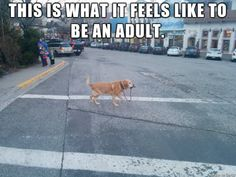 Top 24 Most Relatable Adulting Struggles - QuotesHumor.com