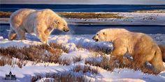 National Wildlife Galleries: The Wildlife Art of Nancy Glazier Wildlife Paintings, Wildlife Art, Animal Paintings, Animal Drawings, Polar Bear Paint, Polar Bear Illustration, North American Animals, Duck Art, Nature Artwork