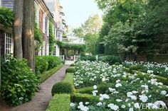 White flowers & boxwood   - Habitually Chic®