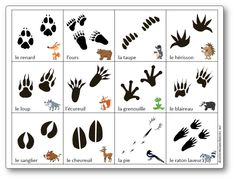 Memoir game of forest animal footprints - animals Forest Animals, Zoo Animals, Animals And Pets, Web Animal, Animal Footprints, Theme Nature, Fun Facts About Animals, Animal Tracks, Extinct Animals