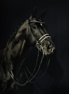 Totilas , the most famous dressage horse in Europe ( interview magazine, Germany)   an amazing horse when Gale had him