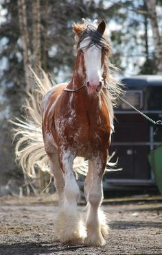 A beautiful draft horse