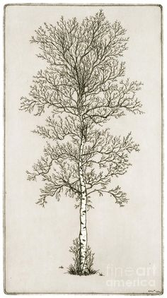 how to draw a birch tree - Google Search