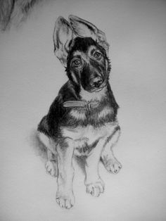 Dog Art, Horse Art & Other Pet Portraits Sketched By Hand in Graphite Pencil Done Working From Your Photos by Pet Artist Genevieve Schlueter. Dog Sketches, Dog Drawings, Portrait Sketches, Drawing Sketches, Drawing Ideas, Studios, Hand Sketch, Sketch Inspiration, Horse Art
