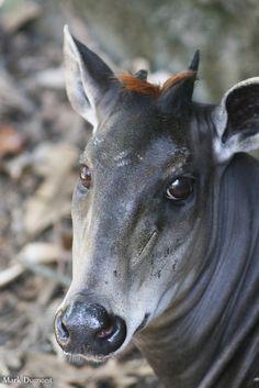 Top 7 Steakhouses In Cincinnati For 2016 Cincinnati Zoo, Cows, Beautiful Creatures, Cute Animals, Faces, Horses, Photo And Video, Friends, Pretty Animals