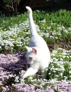 Fantastic Beautiful cats detail are offered on our internet site. Cat Aesthetic, Nature Aesthetic, Animals And Pets, Baby Animals, Cute Animals, Pretty Cats, Cute Cats, Beautiful Cats, Pretty Kitty