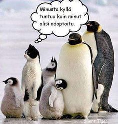 One view four upvotes Finnish Language, Humor, Memes, Funny, Animaux, Kittens, 6 Packs, Humour, Meme