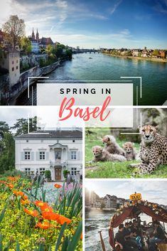Enjoy springtime by the Rhine with sunny cafés and sleepy cobbled streets. Basel, Spring Time, Bloom, Street, City, Roads