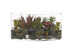 Succulent (GS108): Succulent, Burgundy Green, Glass Oval, 15.5wx8dx8h