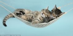 Adorable pictures to melt even the hardest heart: Tiny kittens, cuddly puppies and fluffy ducks pair up for cute photo shoot Kittens Playing, Cute Cats And Kittens, Kittens Cutest, Tabby Kittens, Cute Images, Cute Photos, Sleeping Kitten, Tiny Kitten, Fluffy Puppies