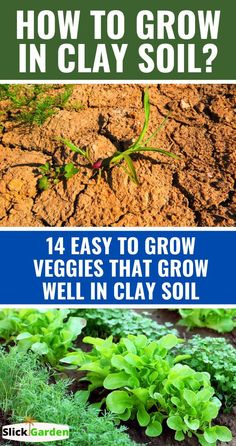 Hobbies To Take Up, Great Hobbies, Growing Strong, Plant Health, Growing Veggies, Home Vegetable Garden, Clay Soil, Healthy Environment, Garden Soil
