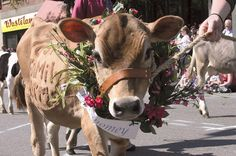 Google Image Result for http://www.csmonitor.com/var/ezflow_site/storage/images/media/images/2011/0704-weekly/0704-dispatches-cow-parade-vermont/10384800-1-eng-US/0704-DISPATCHES-COW-PARADE-VERMONT_full_600.jpg