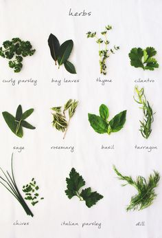 HOW TO USE FRESH HERBS | Fluxi on tour