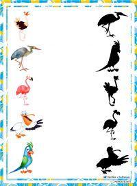 Schaduwen vogels