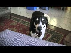 Dog Wants a Kitty. This is so funny and sweet and....if you need a smile, LISTEN and WATCH!