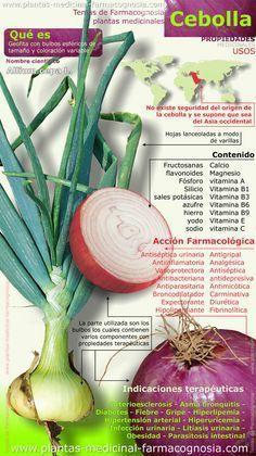 Propiedades de la cebolla. Infografía. Resumen de las características generales de la planta de Cebolla. Propiedades, beneficios y usos medicinales más comunes de la cebolla. Nombre científico.
