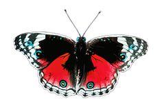 Des Animaux, Papillons, Papillon