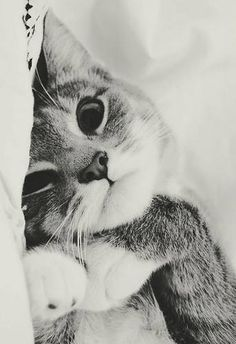 Cute Cat Japanese Names Cute Kittens Hd Pretty Cats, Beautiful Cats, Animals Beautiful, Pretty Kitty, Cute Kitty, Hello Beautiful, I Love Cats, Crazy Cats, Cute Cats And Dogs