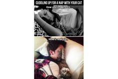 Funny pictures about Cats aren't exactly cuddly animals. Oh, and cool pics about Cats aren't exactly cuddly animals. Also, Cats aren't exactly cuddly animals. Funny Cats And Dogs, Funny Animals, Cute Animals, Silly Cats, Baby Animals, Crazy Cat Lady, Crazy Cats, Funny Cute, The Funny