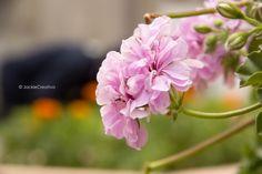Está flor al igual que la anterior también la tome en el parque 7 de junio de miraflores..  Fotografiado por:©JackiCreativa