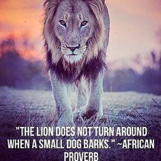 Are you the lion or the dog?