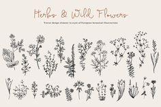 Herbs & Wild Flowers. Set - Illustrations