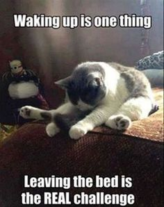 funny cats and dogs ; funny cats can't stop laughing ; funny cats and dogs videos ; funny cats with captions Funny Animal Jokes, Cute Funny Animals, Funny Animal Pictures, Cute Baby Animals, Funniest Pictures, Cute Animal Quotes, Funny Animal Humor, Funny Cute Cats, Silly Cats