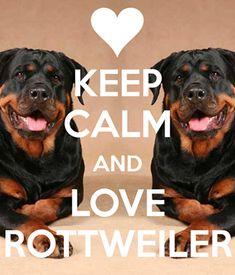 Beautiful #Rottweiler pair