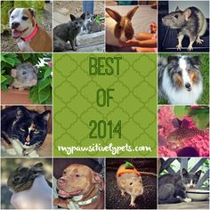 Pawsitively Pets Best of 2014 | Pawsitively Pets