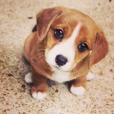 #dog #cat #animal #pet #family #furry #adorable #doglover #catlover #kitten #puppy #smile #happy #love #nature #hamster #rabbit #dogstagram #cute #bestfriend #animalsofinstagram #petoftheday