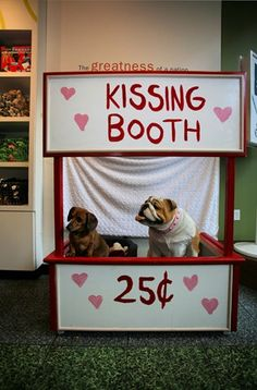 Definitely want this at our wedding for our bully Titus! Any money will go to Titus's favorite animal rescue!