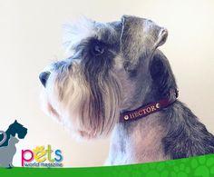 Buenos días ☀️  #PetsWorldMagazine #RevistaDeMascotas #Panama #Mascotas #MascotasPanama #MascotasPty #PetsMagazine #MascotasAdorables #Perros #PerrosPty #PerrosPanama #Pets #PetsLovers #Dogs #DogLovers #DogOfTheDay #PicOfTheDay #Cute #SuperTiernos